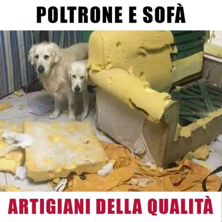 Mammifero Detto Poltrone.Poltrone E Sofa Humor Divertente Humor Divertente