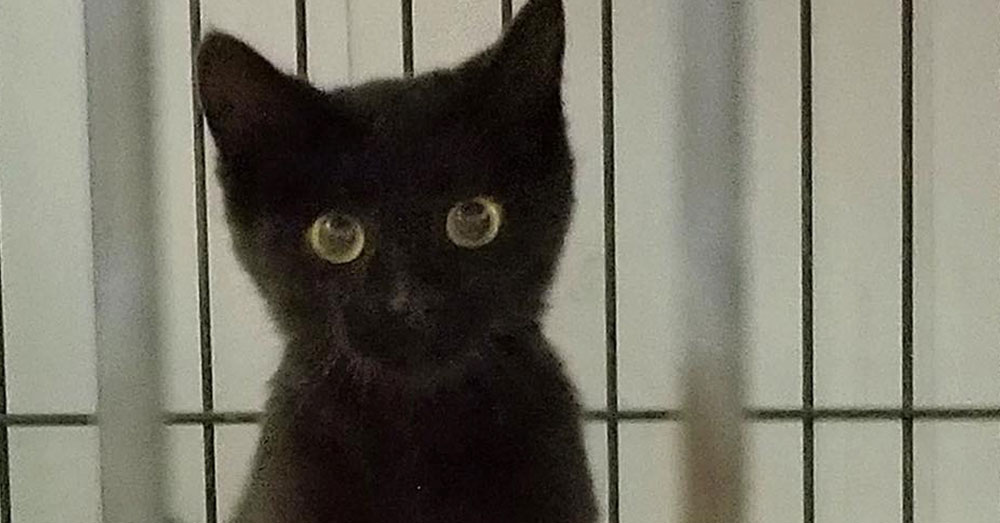 Tiny Kitten Rescued In Ashes Of Famous West Michigan Hot