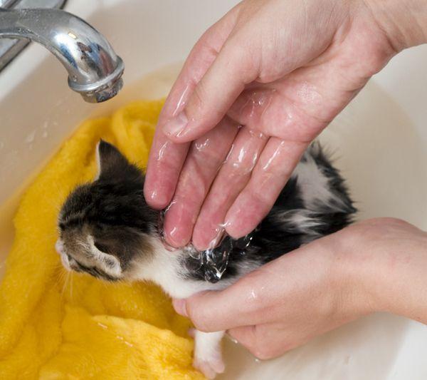 9 Methods Of Natural Flea Control For Cats Flea Remedies Cat Fleas Flea Bath For Cats