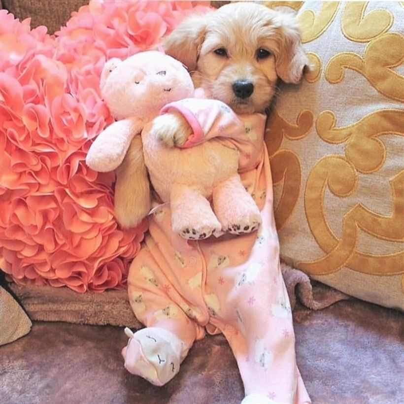 Photo of 😘 #puppy #pet