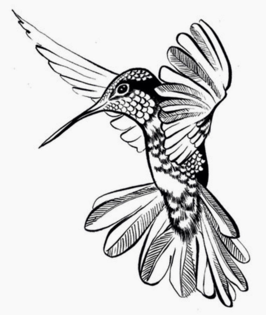 Pin by Jessica Medeiros on Tampon Hummingbird drawing