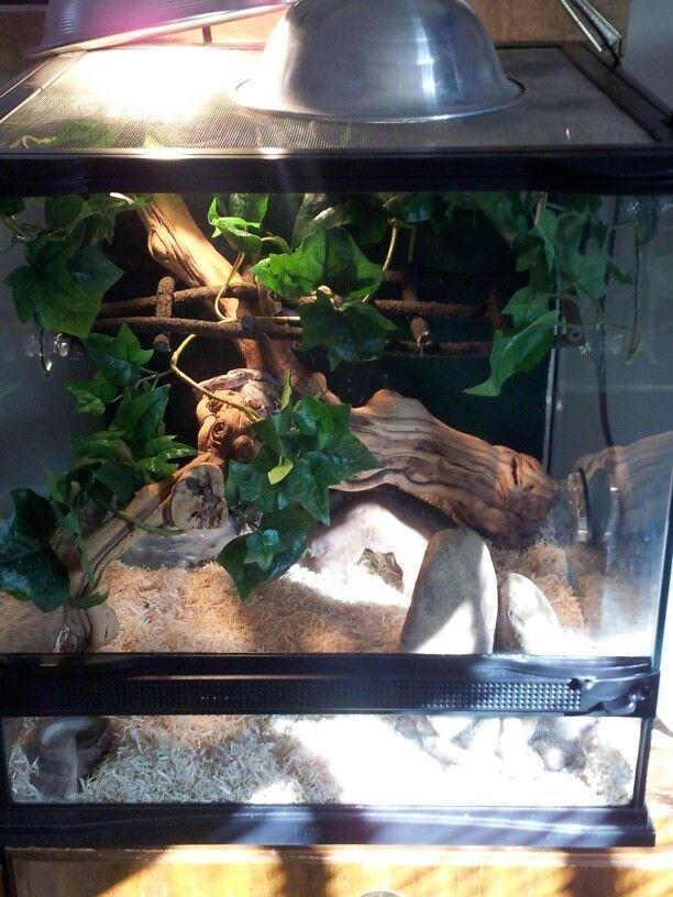 Snake Setup Redtail Boa Tank Reptile Encloser
