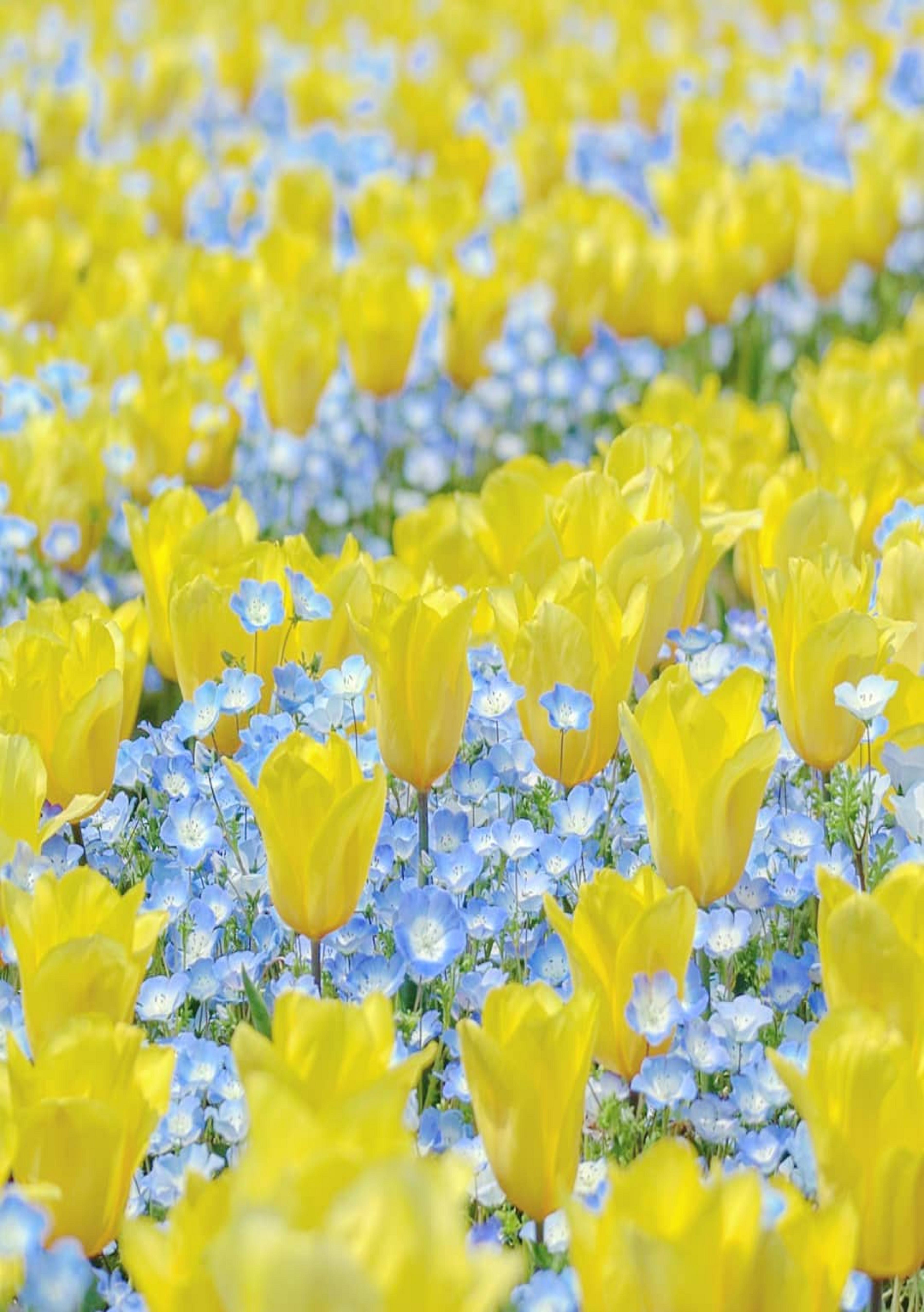 Pin by ivanka kostova on растения Flower field, Flowers