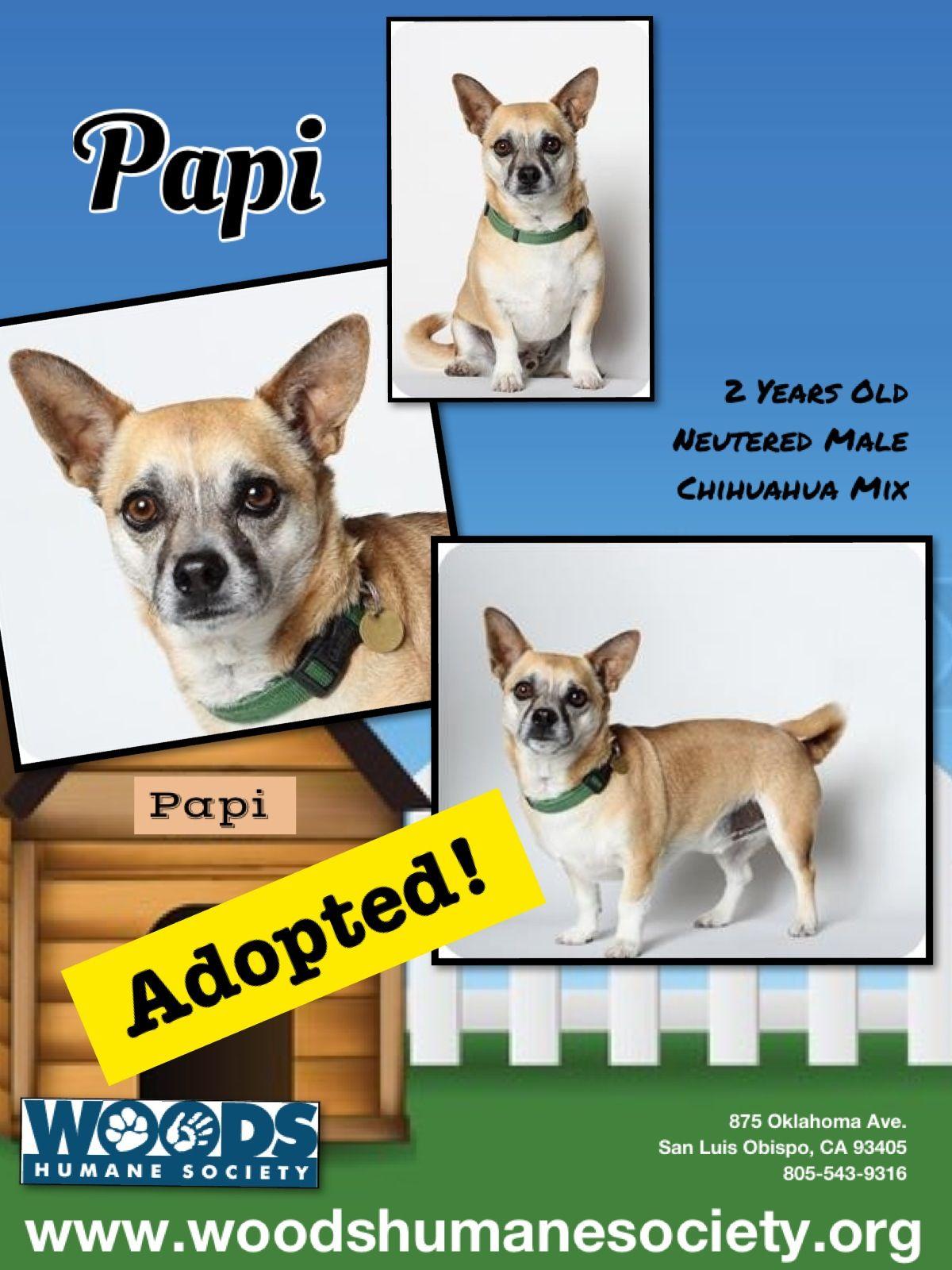 Adopted! Humane society, Chihuahua mix