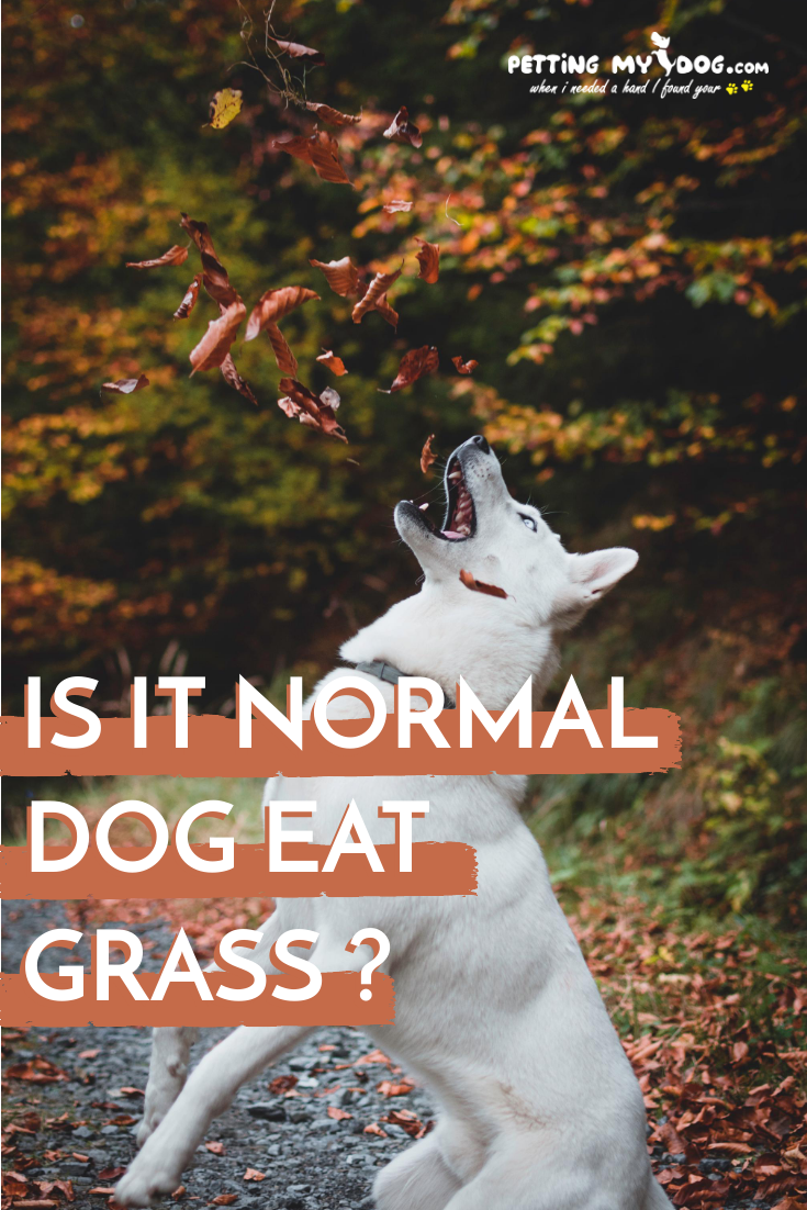 Is It Normal For Dogs To Eat Grass Dog Birth Dog Food Recall Happy Animals