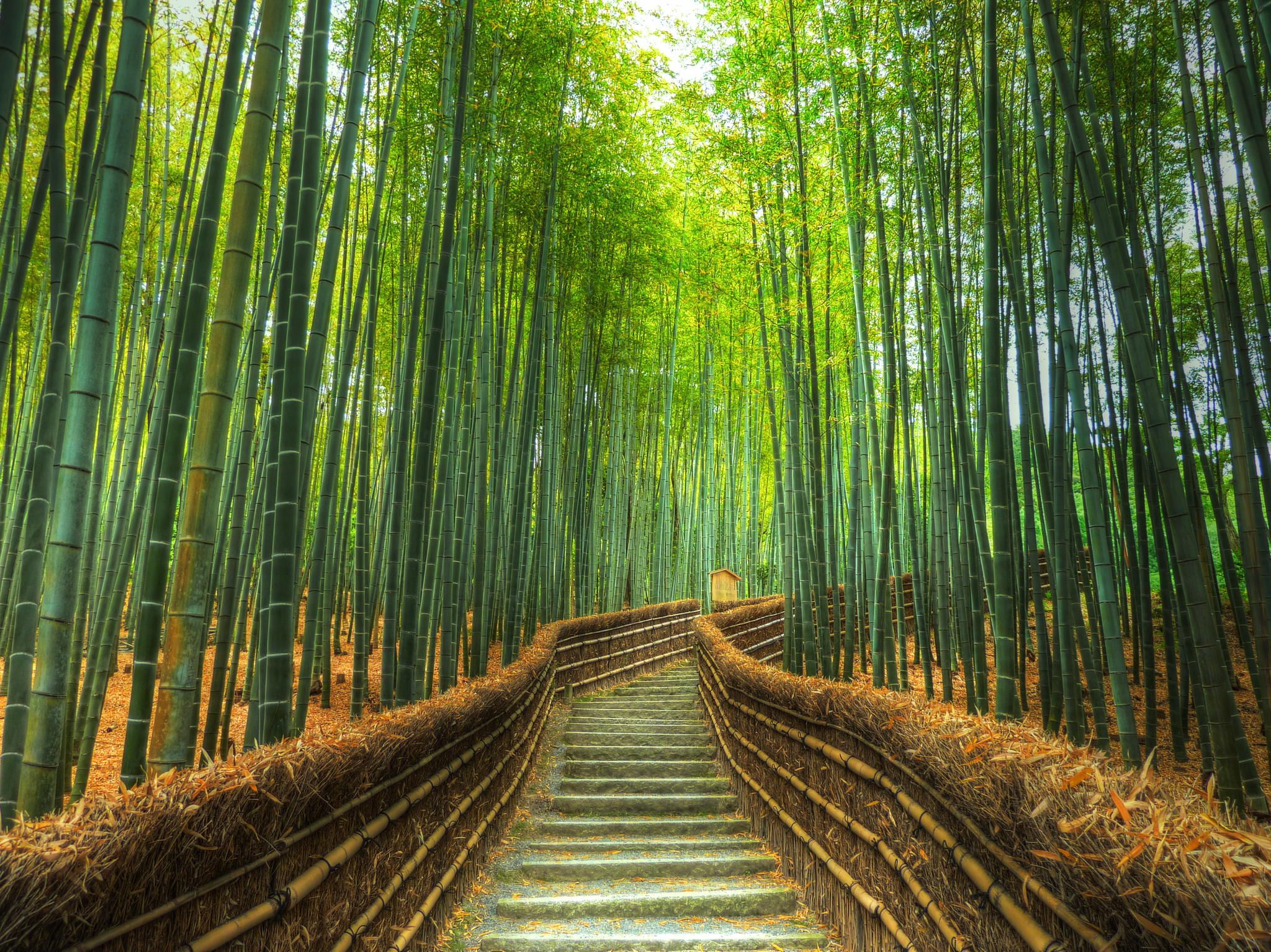 Kyoto, Japan Discovered from Dream Afar New Tab Bamboo