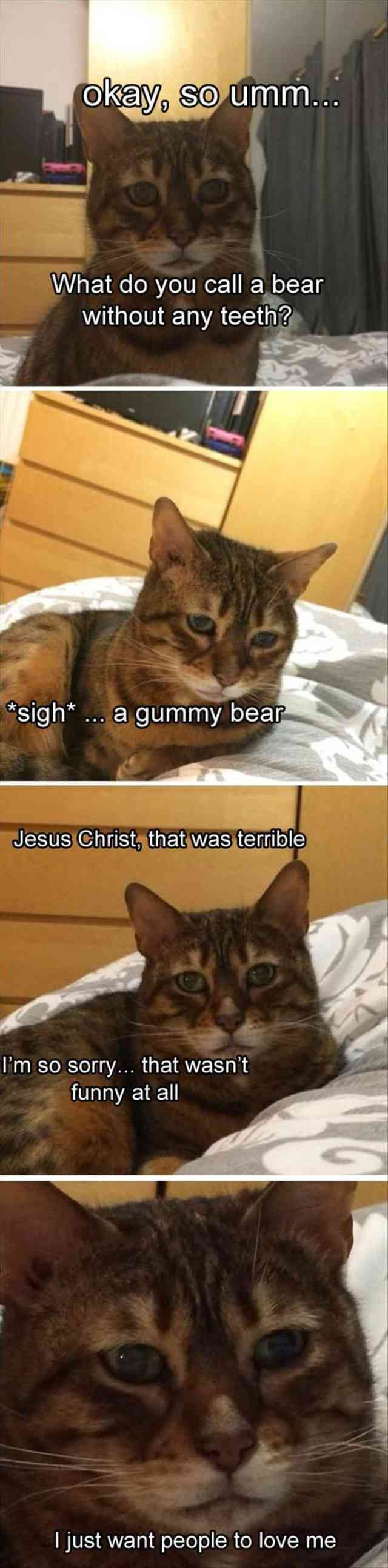 Cat Kitten Joke Humour Image Meme Okav So Umm What Do You Call A Bear Without Any Teet Sigh A Gummy Bea Jes Funny Animals Funny Cat Memes Funny Pictures