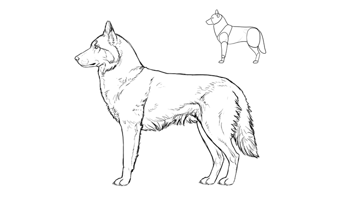 How To Draw Dogs Dog Drawing Animal Sketches Dog Paintings