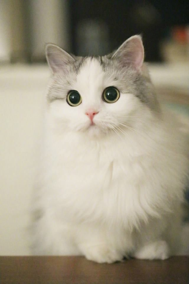 The 100 Most Cute Cat Pictures Of All Time In The World