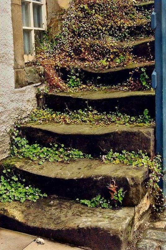 escalier fleuri   Monter ou descendre ? en 2019   Escalier ...