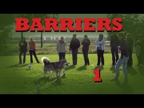 Teach Your Dog To Stay In Your Yard Invisible Barriers Part 1