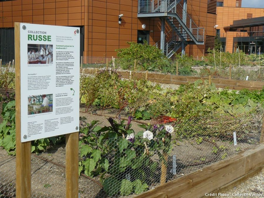5 potagers qui sauvent la plan te jardinage pinterest banlieue le potager et poss der. Black Bedroom Furniture Sets. Home Design Ideas