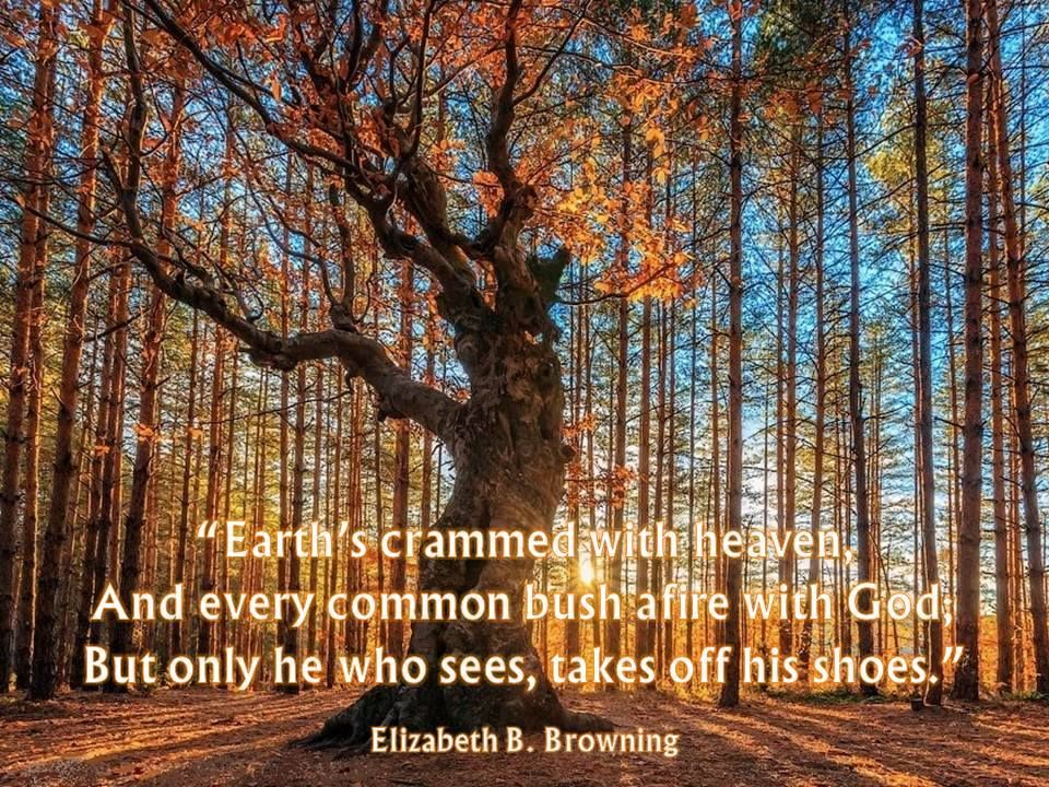 every common bush afire with god
