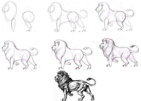 Как рисовать льва карандашом поэтапно Уроки рисования in
