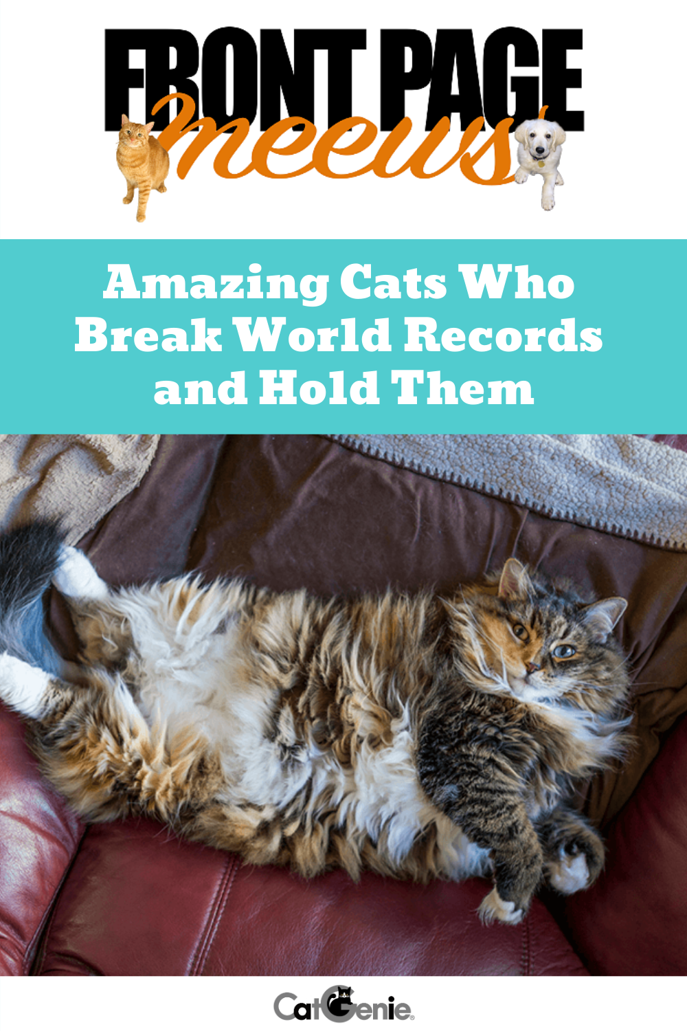Amazing Cats Who Break World Records and Hold Them Pet