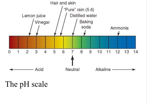The Importance Of Ph Hair And Hair Products Hair Cosmetology