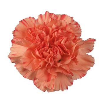Order Orange Carnation Flowers For Your Wedding Orange Wedding Flowers Carnation Flower Carnation Wedding Flowers