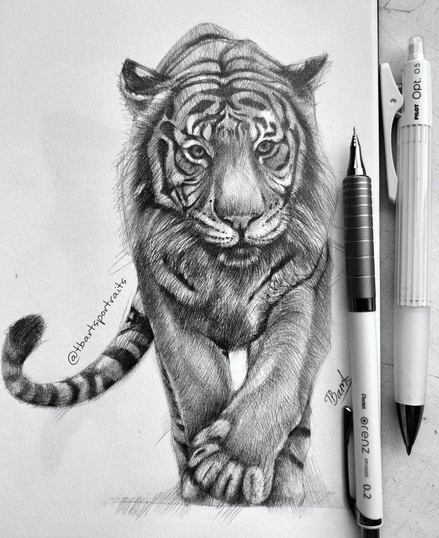 Risuyu Painting Sketchbook Sketch Sketching Tiger Art Pencil Animal Drawings Sketches Animal Drawings Art Drawings Sketches