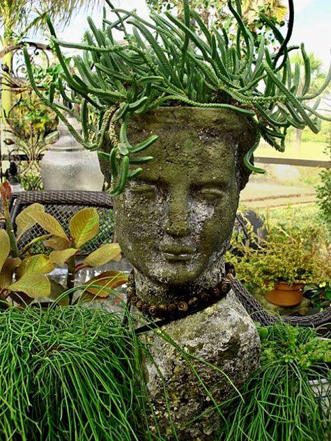 Medusa-hair succulent cactus
