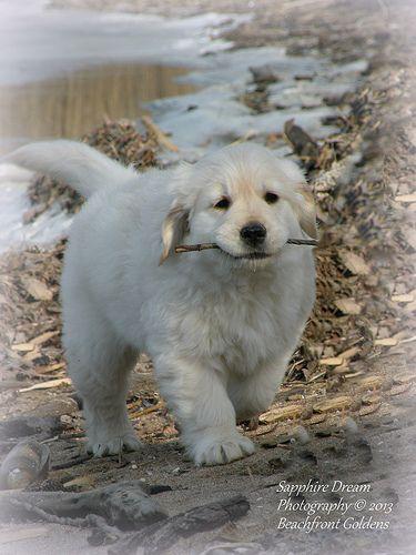 Slowpoke Almost Eight Weeks Most Beautiful Dog Breeds Beautiful