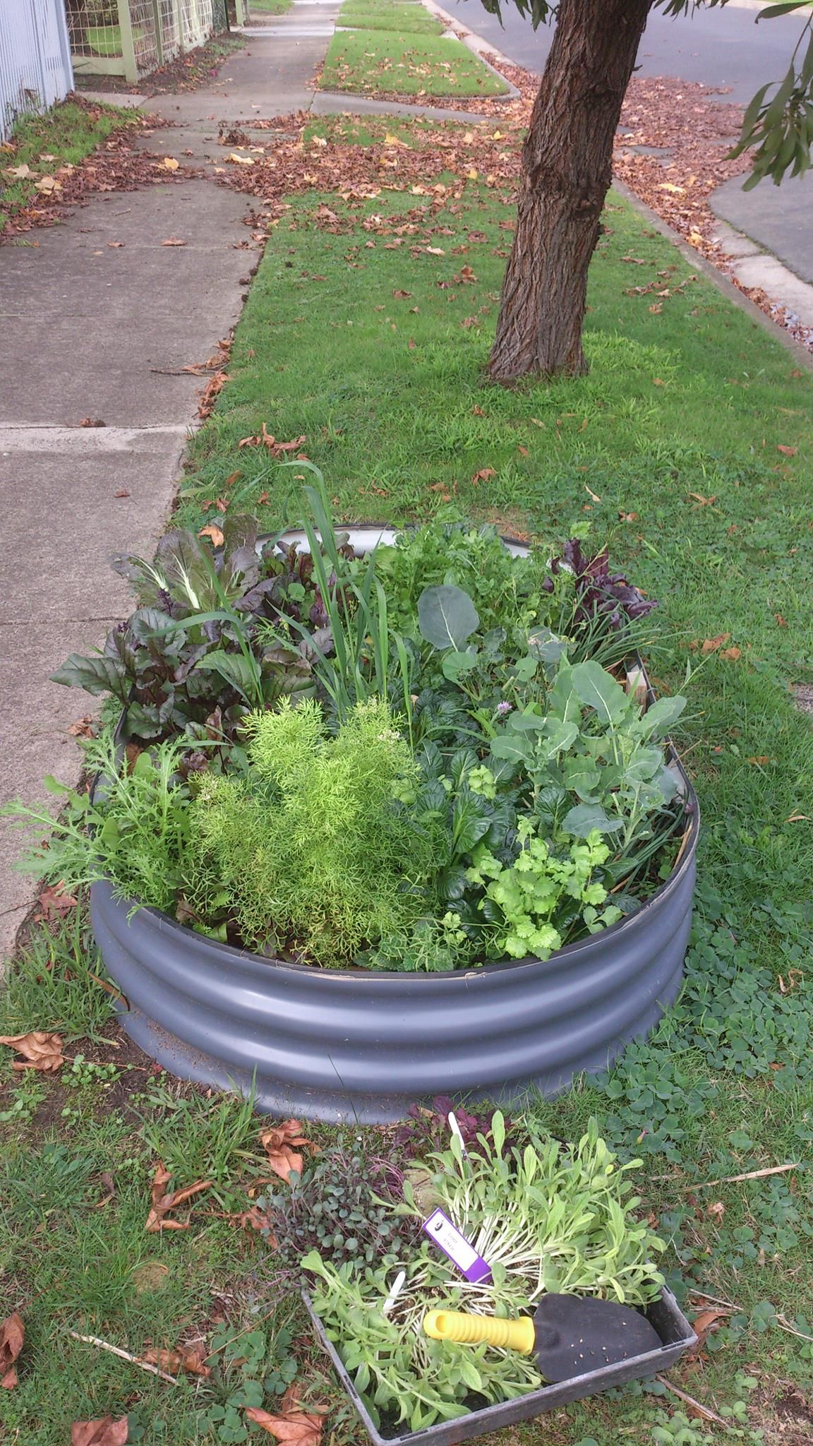 the verge garden growing better in winter