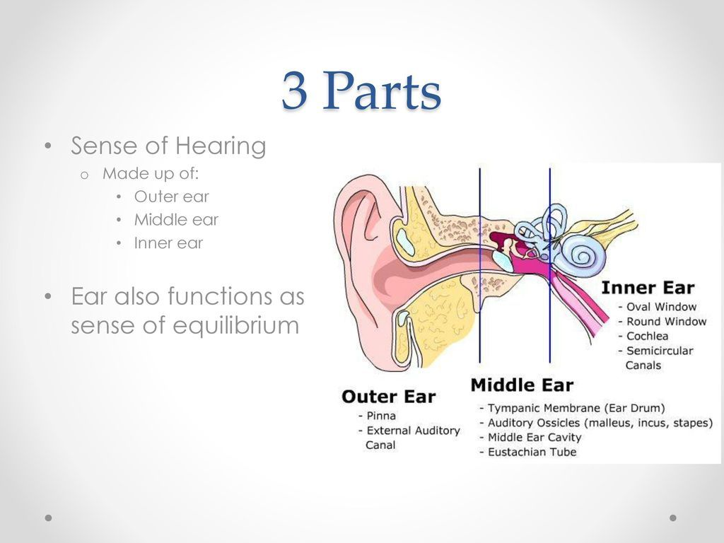 Pin By Mlc On Ear Anatomy