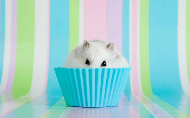 Hamster Hintergrunde 40 Hintergrundbilder Hamster Wallpaper Hamster Baby Hamster
