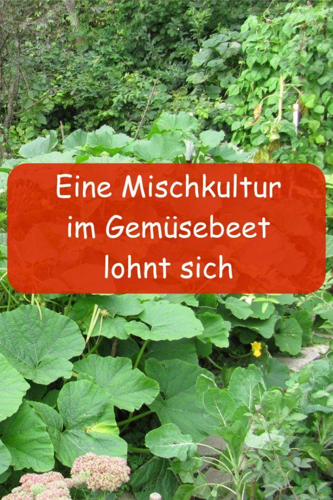 Mischkultur im Gemüsegarten » GartenBob.de der Garten Ratgeber
