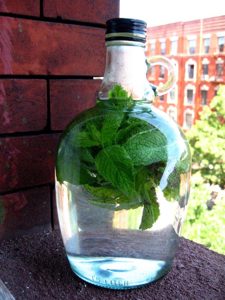 Las Bebidas: Agua de Yerba Buena (Mint Water)
