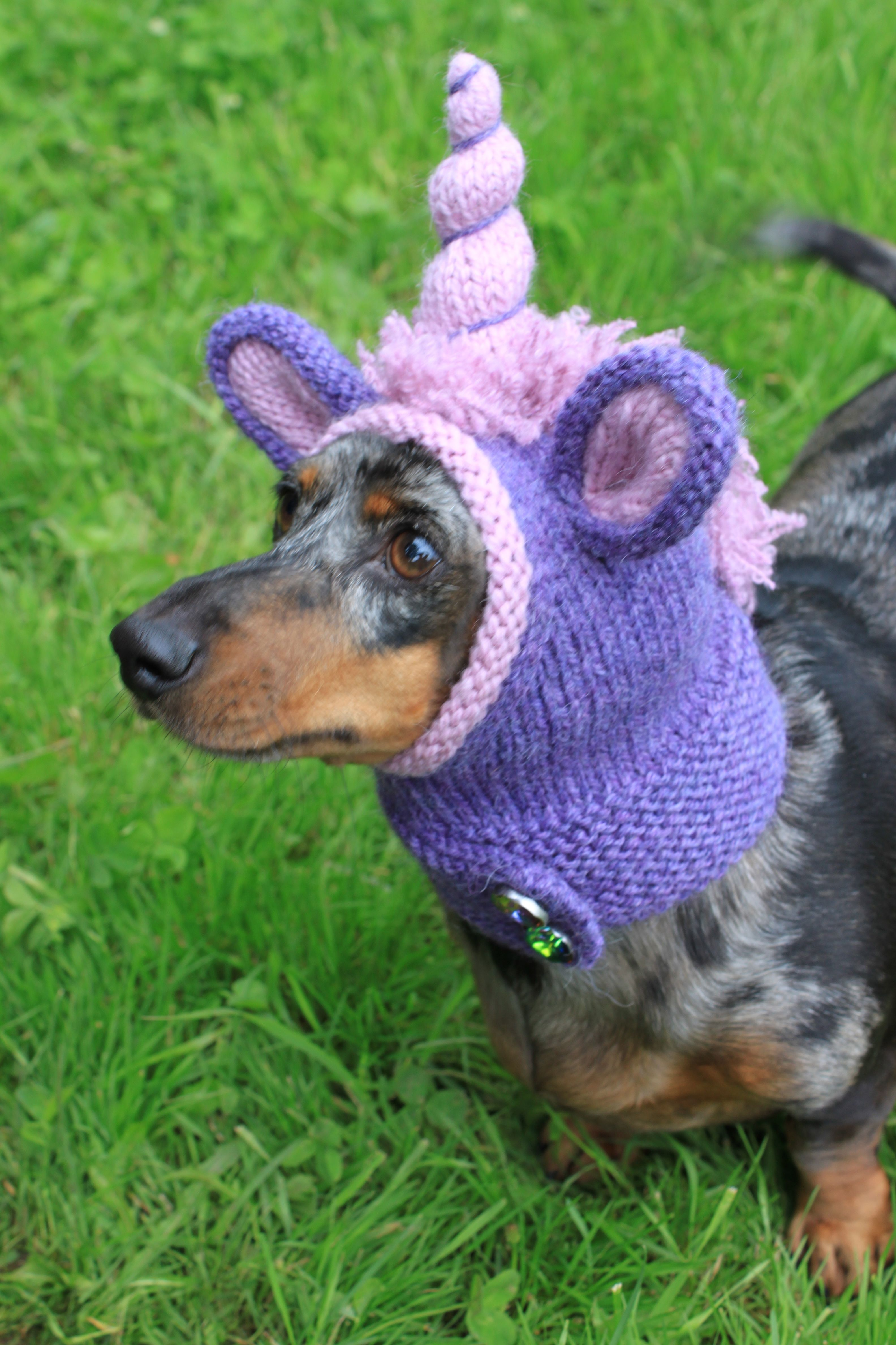 Knitting Pattern Dachshund Unicorn Hood Dog Hat Dogs Pet Pet