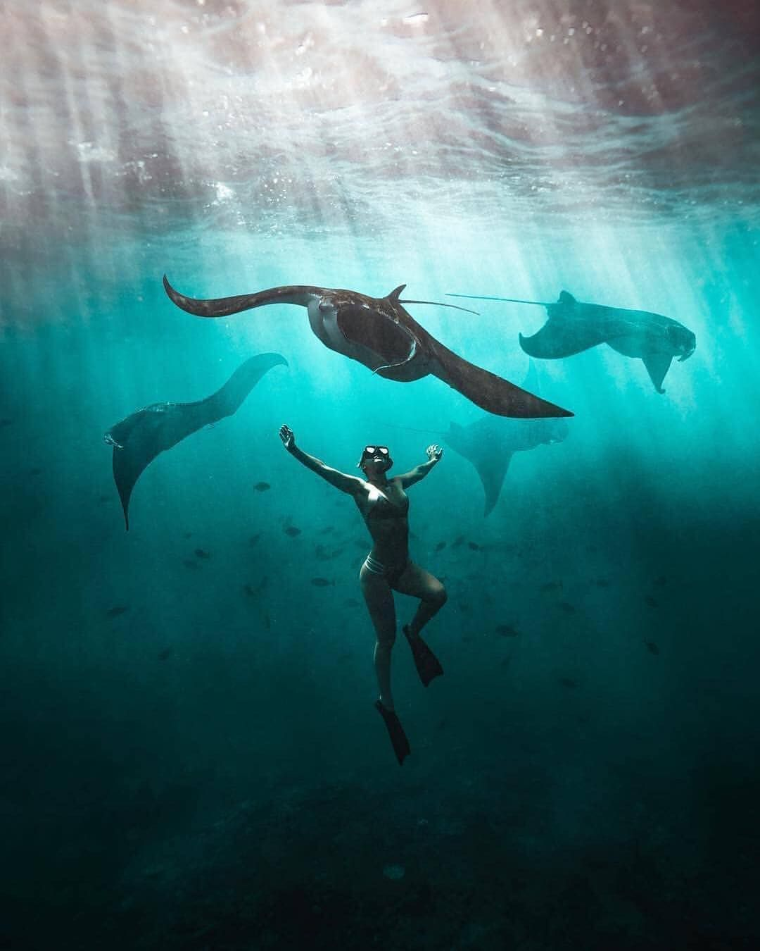 Literally The Best Experience Of My Life What An Incredible Feeling To Swim With These Gentle Giants Brandon With Images Manta Ray Kite Surfing Underwater Photography