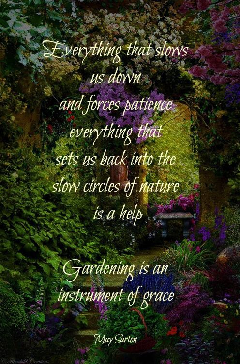 Gardening Quotes to Brighten Your Day | Garden quotes ...