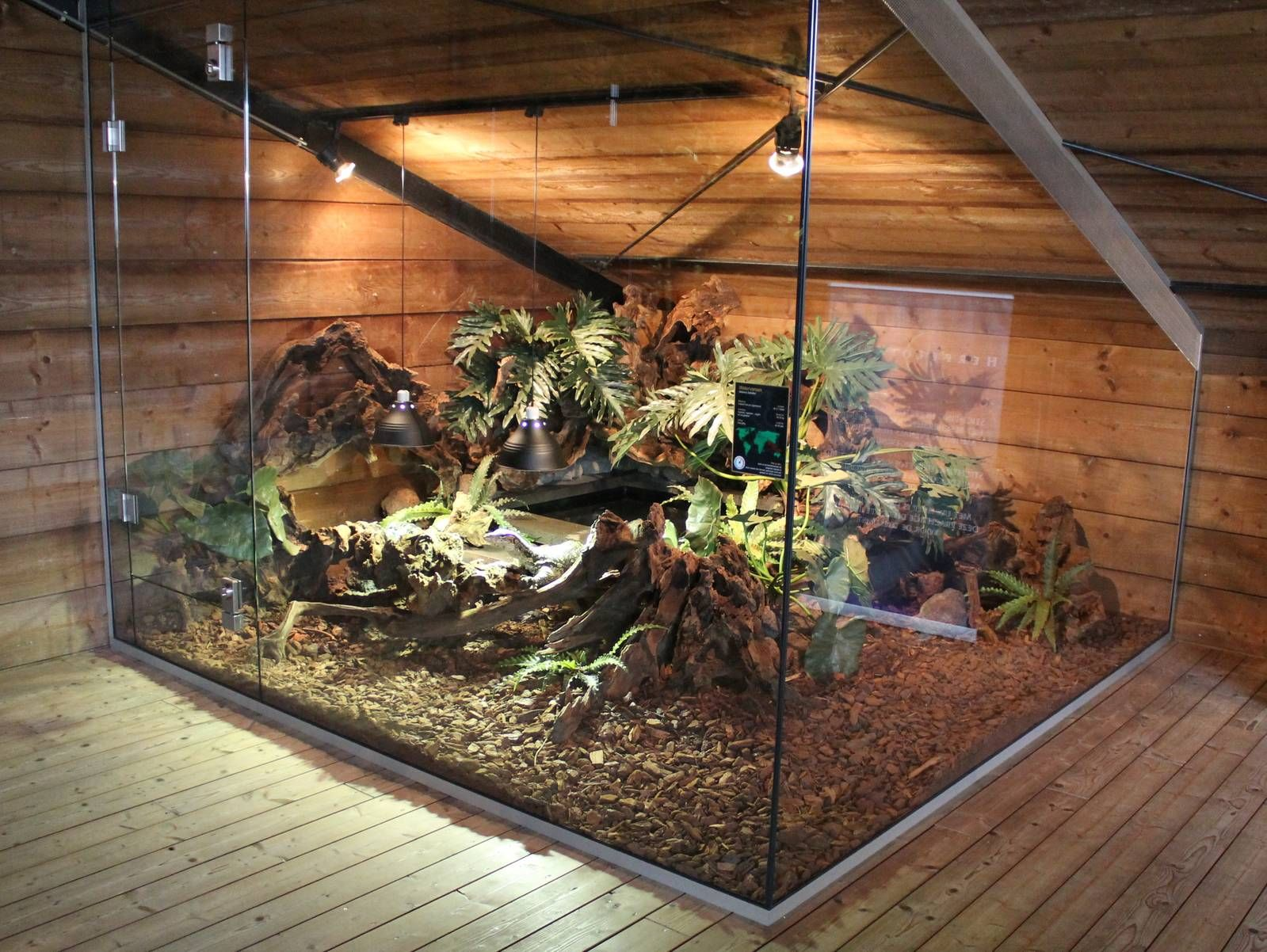 Reptile Big Enclosure Google Search Terrariums