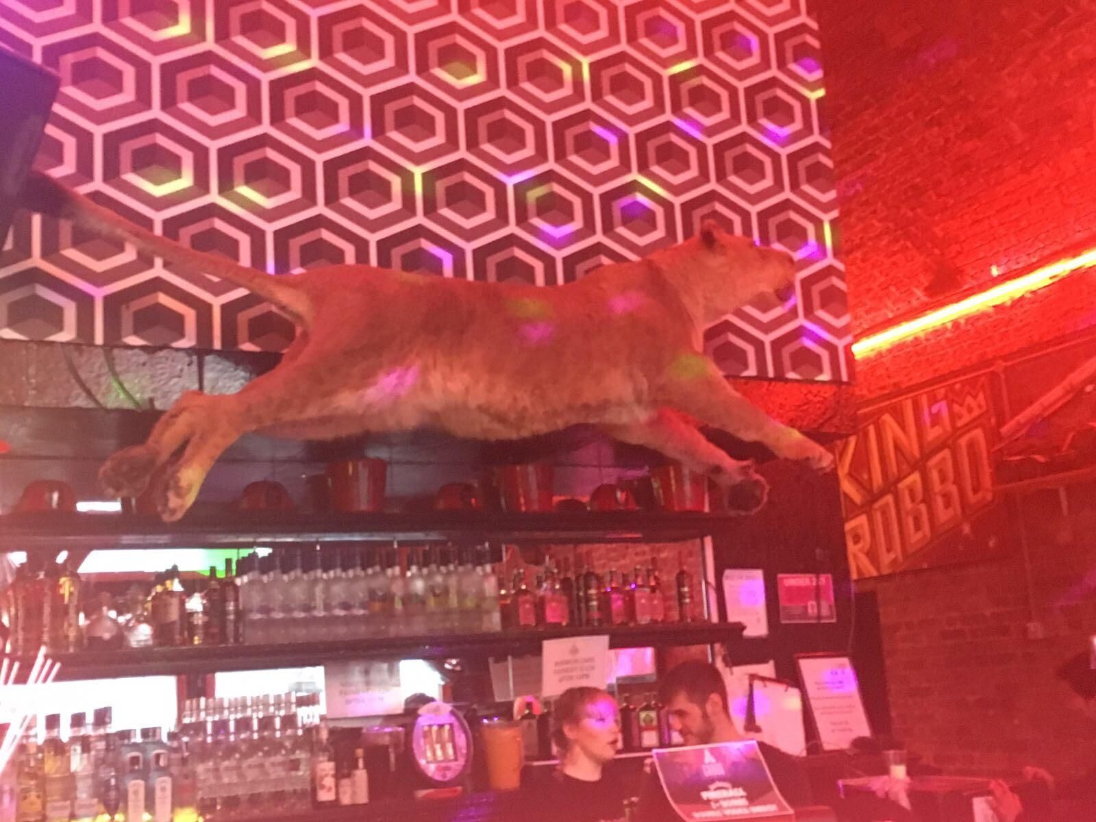 Decorative Taxidermy Spotted In Cargo (one Of Londonu0027s Crappiest  Nightclubs). Humans Are An