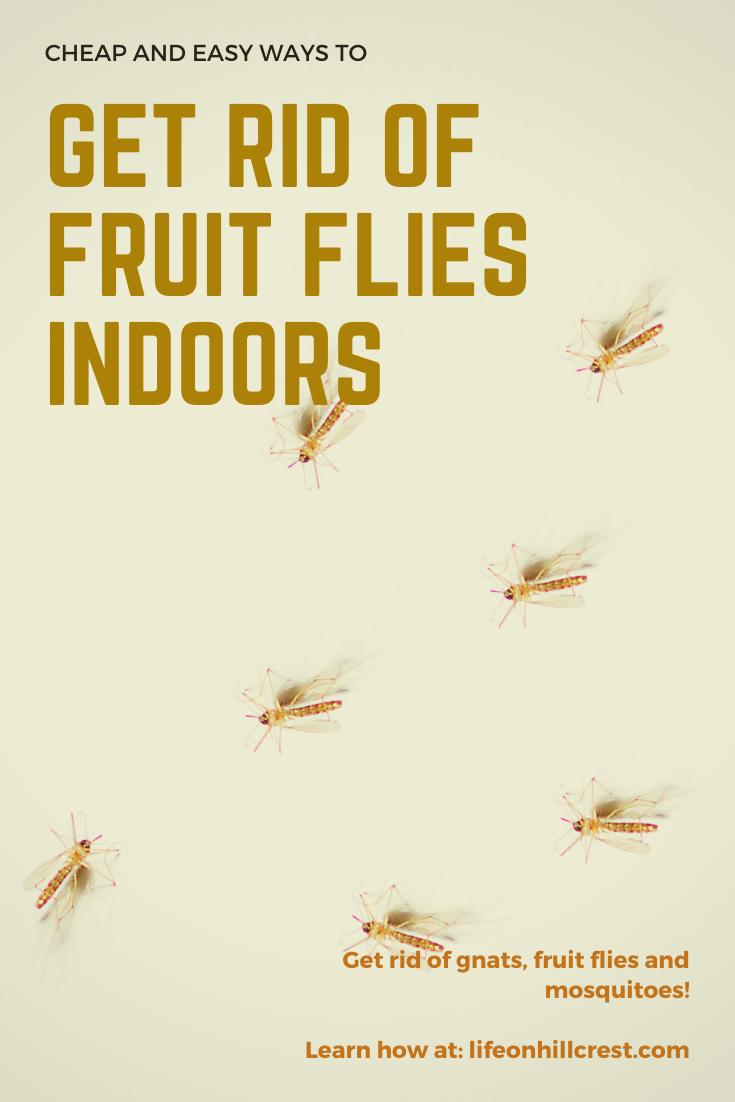 Get Rid Of Fruit Flies Indoors Fruit Flies How To Get Rid Of Gnats Fruit
