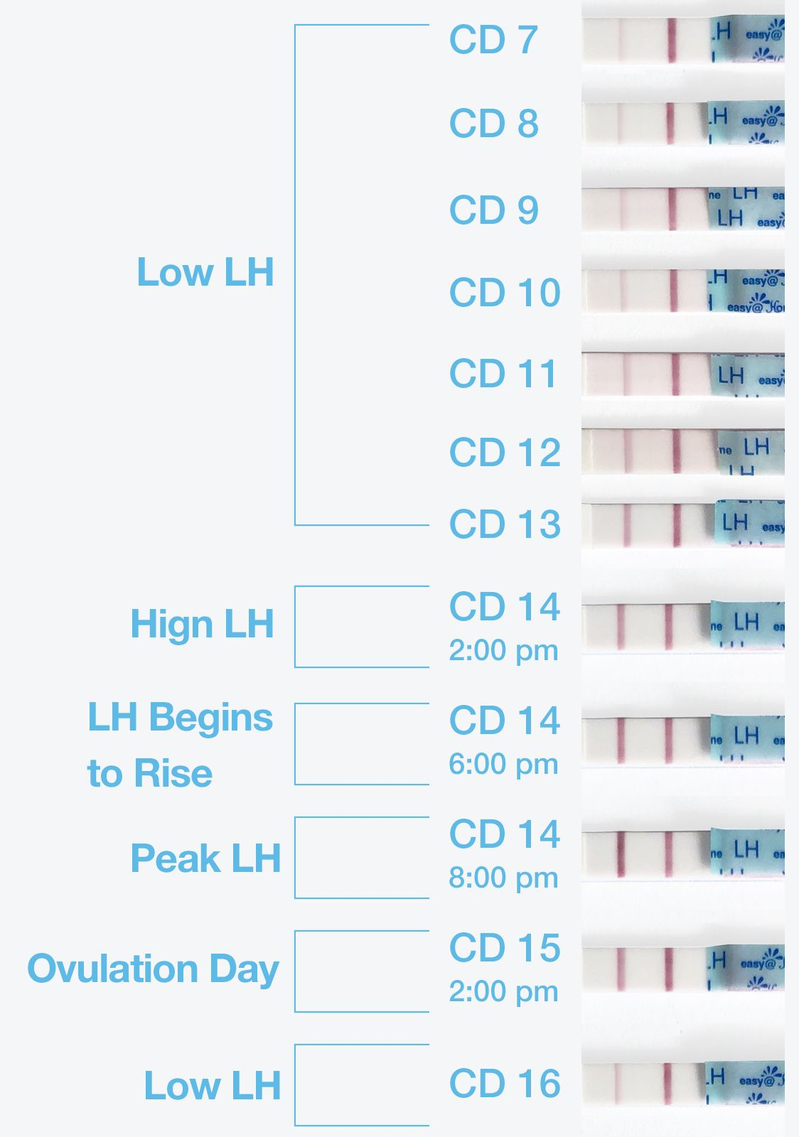 Premom ovulation calculator helps you track ovulation progression