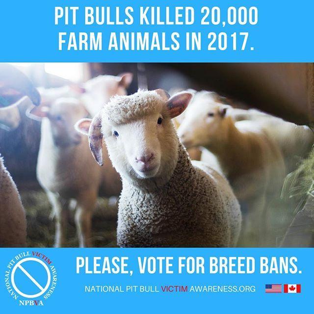 Pin on Pit Bull Victim Awareness
