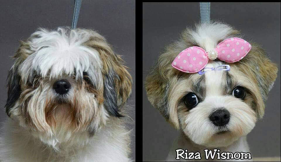 Repinned Before After Grooming Photos Dog Grooming Styles