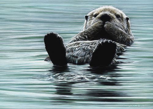 Edward Spera Gallery / Kicking Back - Sea Otter