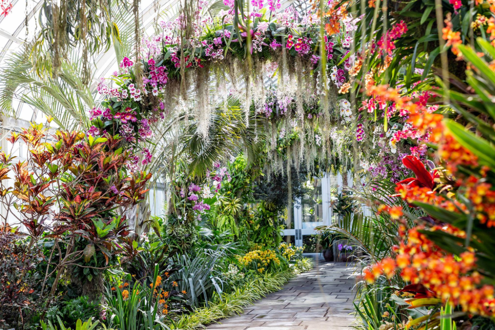 Walk Through A Sea Of Orchids At The New York Botanical Garden S