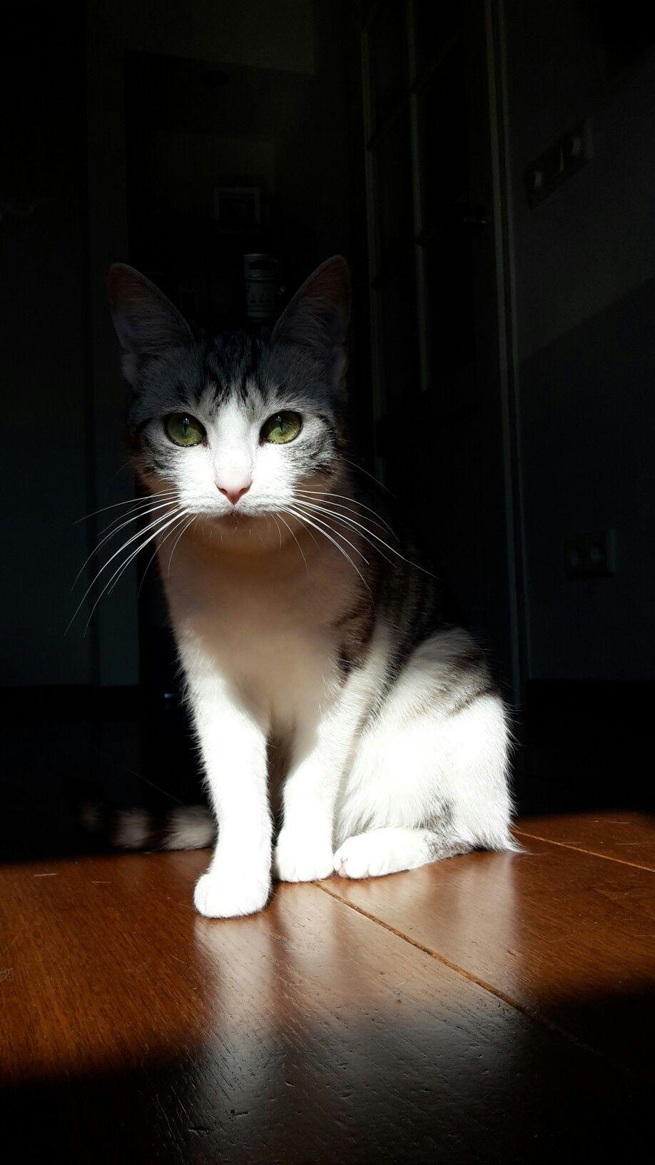 Sun light cat