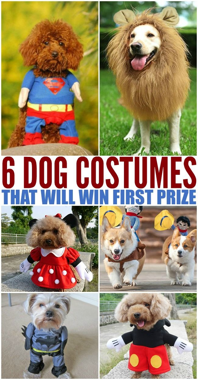 Adorable Dog Costumes For Halloween Pet Halloween Costumes