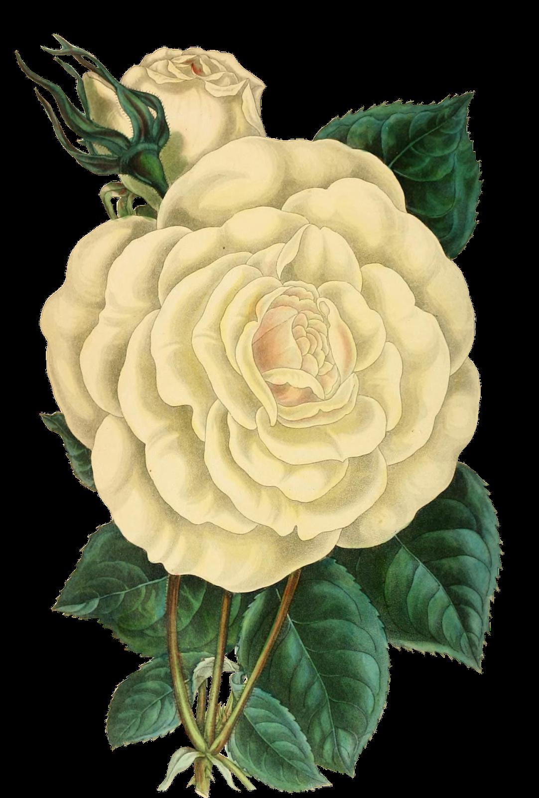 Gambar Kartun Bunga Mawar Lukisan Bunga Seni Bunga Seni Krayon
