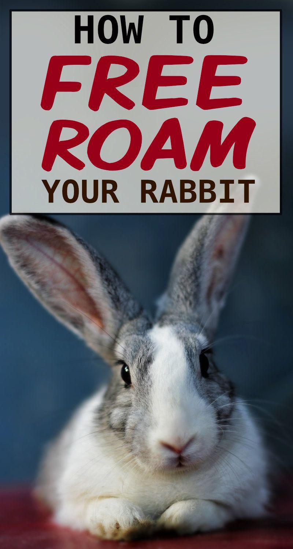 Pin On Bunny Behaviors