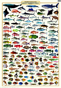 A Laminated Fish Identification Poster Covering The Fish Of The Great Barrier Reef Fish Chart Great Barrier Reef Tropical Freshwater Fish