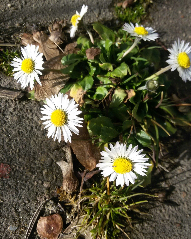 Pflanzen  frühling#garten#garden#gartenliebe#samen#pflanzen#greenlove#blumen ...
