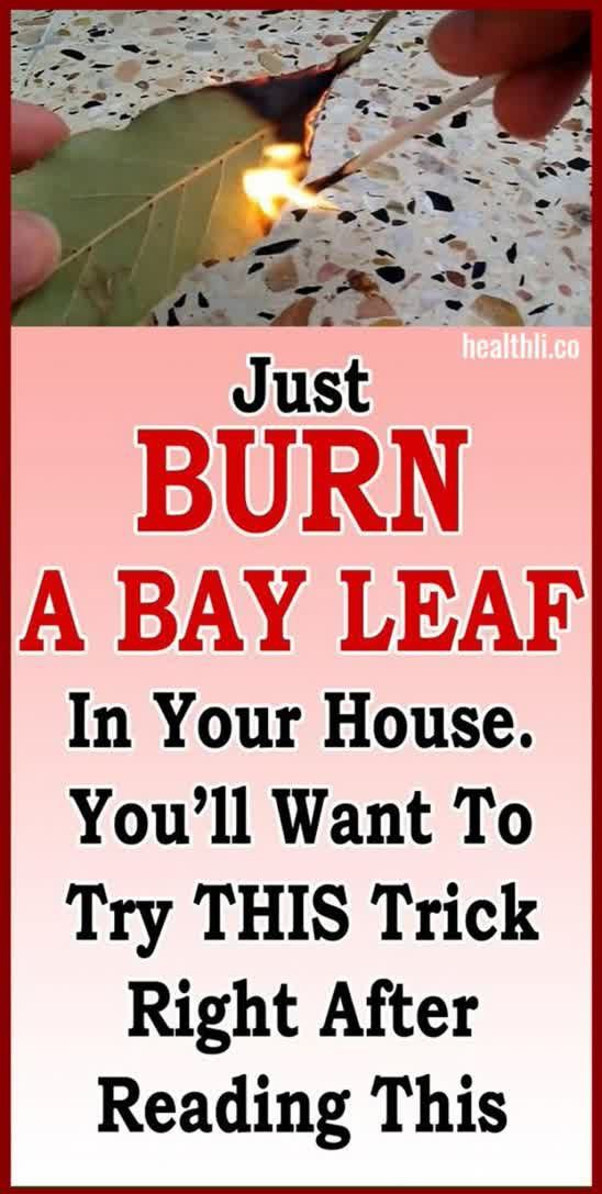 Just Burn A Bay Leaf In Your House. You'll Want To Try This Trick…