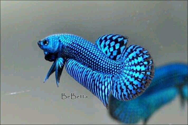 Blue hybrid alien  #by_bebetta