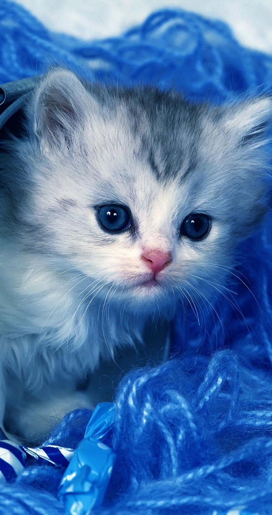 Pin By Gulun Kokusu On Kittens Cute Cats And Kittens Cute Animals Cute Cats