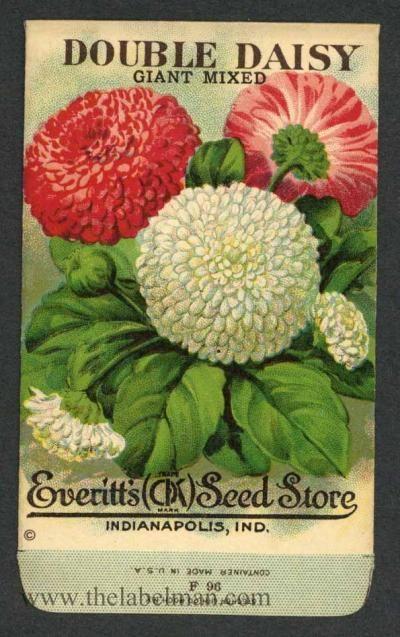 Everitt's Seed Store Double Daisy 1910's